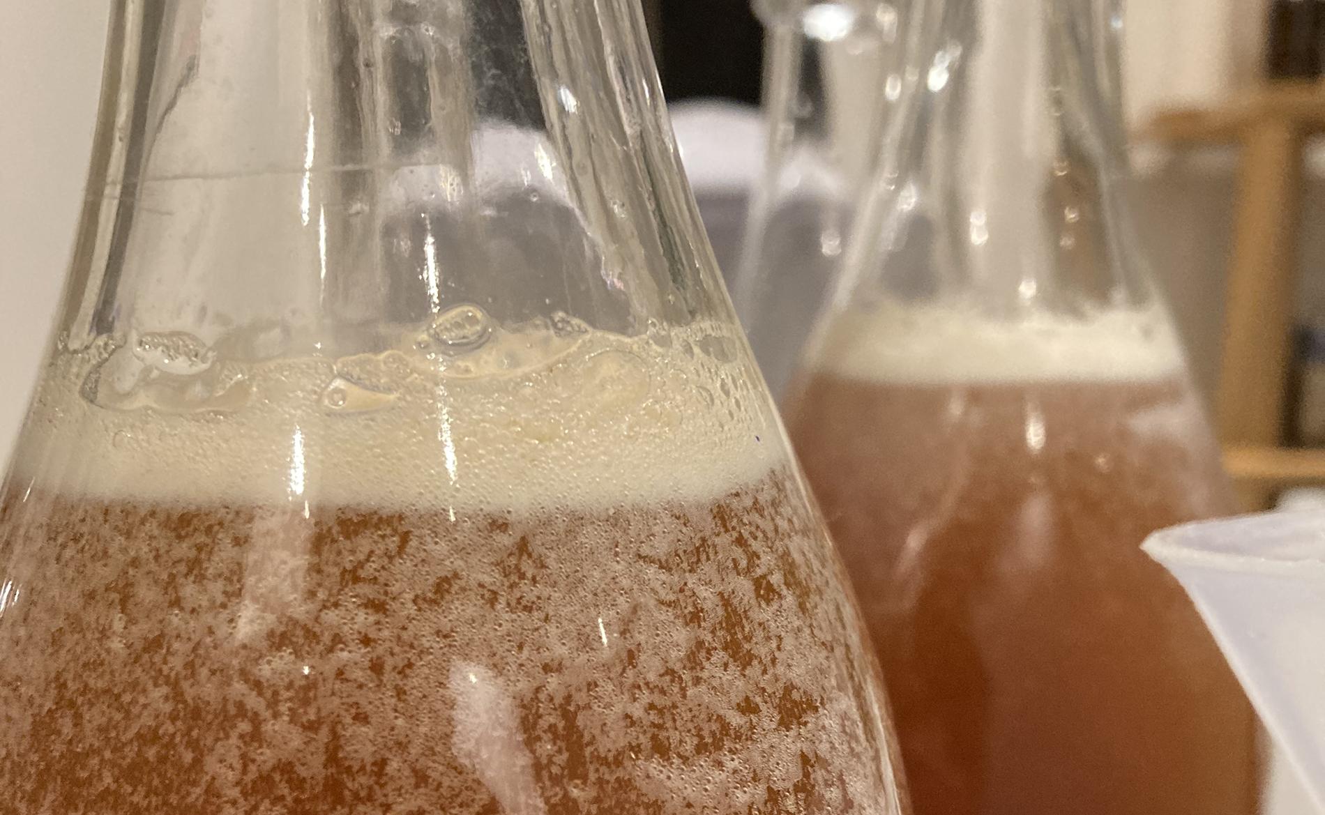 No-lo & alco fermentation